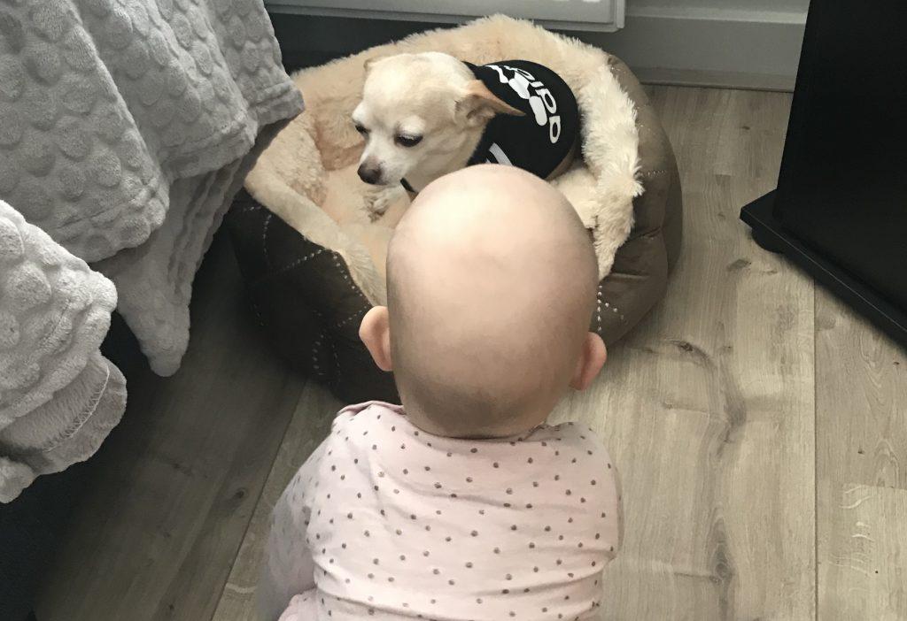 Dreumes tag: Zoë is 16 maanden
